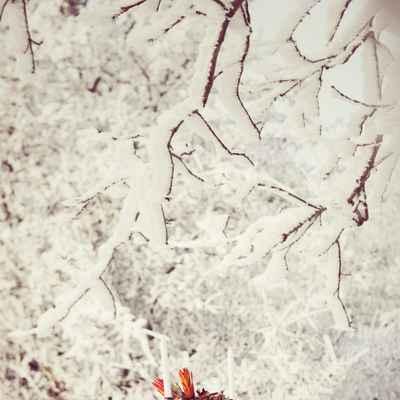 Winter photo session decor