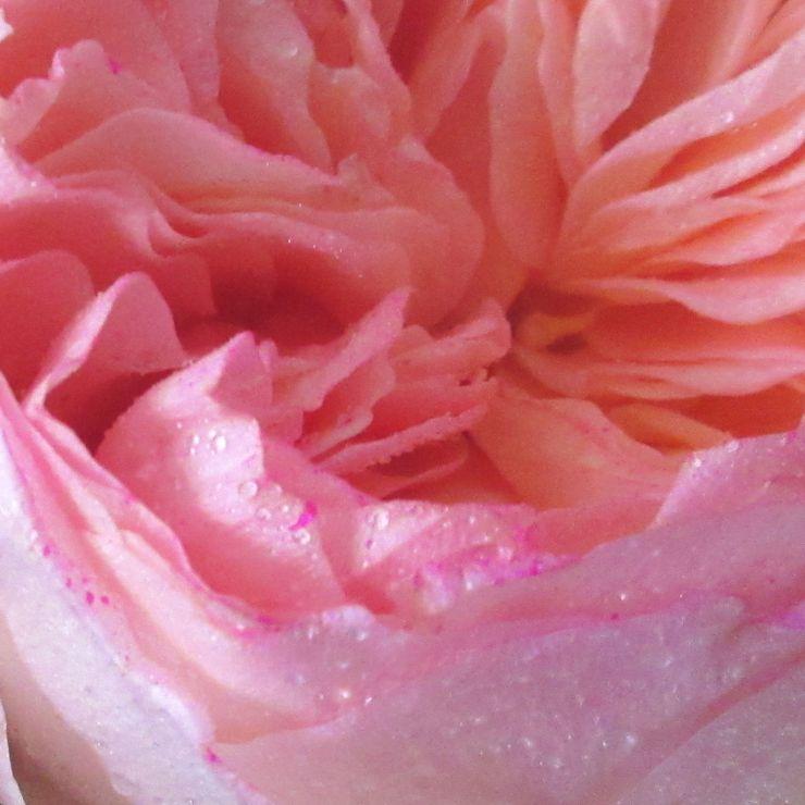 SHADES of Pink/Blush !!!